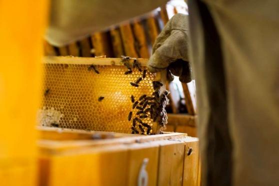 Včelka od Slavia pojišťovny pomůže českým včelařům. Program je zaměřený na specifická rizika spojená s chovem včel